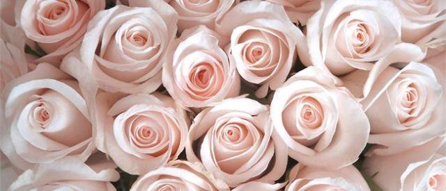 flowersroses